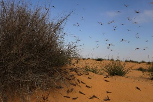 Egypt Demands Compensation for 10 Plagues