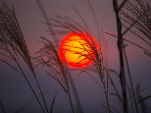 orange-sunset-yamashita_1476_600x450