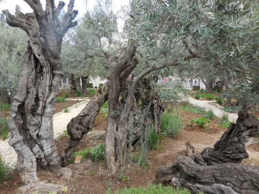 Gethsemane Feb 2015